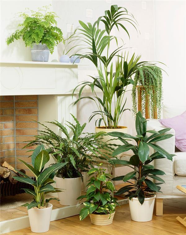 客廳植物擺放風水 提升家居正能量 - 愛我窩