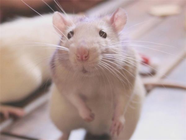倉鼠吃什麼食物好 - 愛我窩