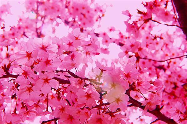 什麼植物招桃花容易 - 愛我窩