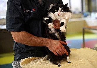 gato con prótesis