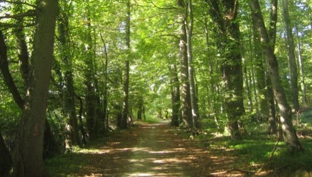 Resultado de imagen para Ley Forestal