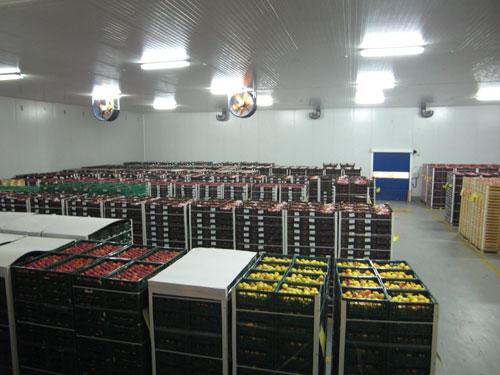 Espaa aprueba en comercializacin y transporte de frutas