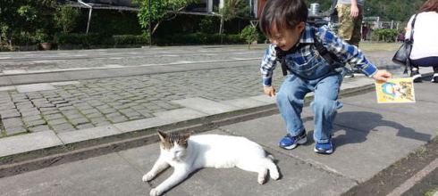 親子火車環島紀錄9●宜蘭線:猴硐站●同大爺在貓村裡一路摸貓