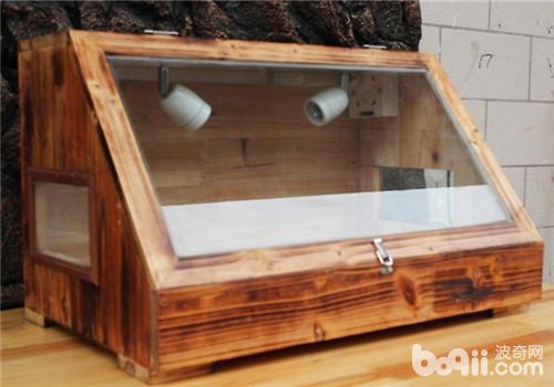 陸龜飼養箱如何佈置? - 愛寵物咨詢網