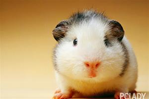 倉鼠死了怎麼處理 - 愛寵物咨詢網