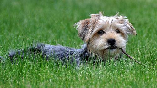 狗身上有紅點怎麼辦 趕走各種皮膚病 - 愛寵物咨詢網