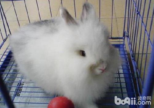 兔子有哪幾種鼻炎 - 愛寵物咨詢網