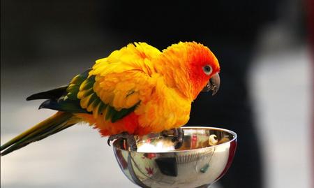 鸚鵡幼鳥怎麼養 可選擇幫鸚鵡幼鳥剪羽 - 愛寵物咨詢網