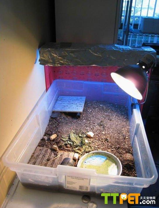 中小型陸龜室內飼養環境參考 - 愛寵物咨詢網