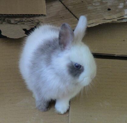 怎麼樣養兔子 飼養環境最好是較寬敞 - 愛寵物咨詢網