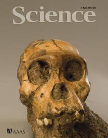 Portada de la revista Science que recoge el hallazgo del Australopithecus Sediba
