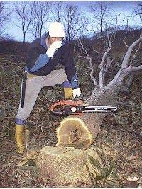 木こりの生活