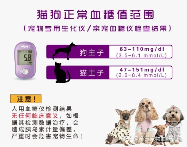 寵物貓狗得了糖尿病怎麼辦?在家測血糖的實用方法 - ITW01
