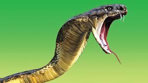 ухапване змия