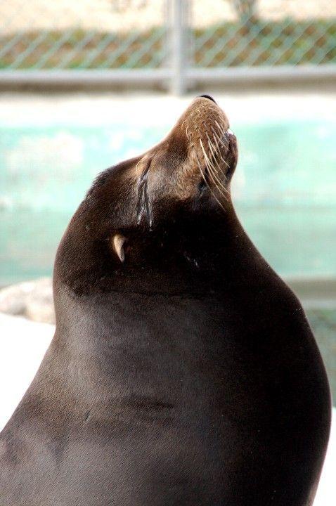 Cute marine mammals 66 pics  Izismilecom