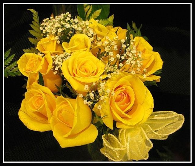 The Yellow Wallpaper Important Quotes Beautiful Yellow Roses 32 Pics Picture 21 Izismile Com