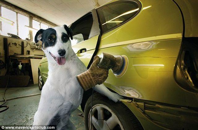 Cute And Funny Cat Wallpaper Great Auto Repair Shop Staff 12 Pics Izismile Com