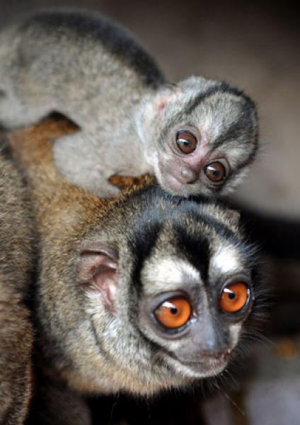 Cute Baby Animal Wallpapers Desktop Sweet Baby Animals 40 Pics Izismile Com