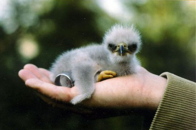 Ugly but Cute Baby Animals 55 pics  Picture 30