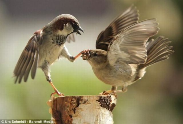 Funny And Cute Wallpaper For Desktop Kung Fu Birds Style 7 Pics 1 Gif Izismile Com