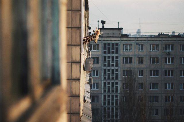 жираф на терасата