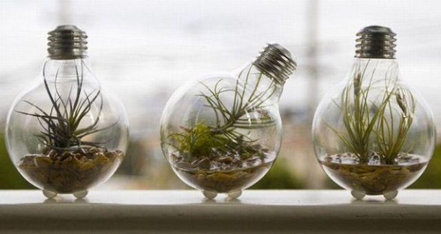 amazing light bulb planters
