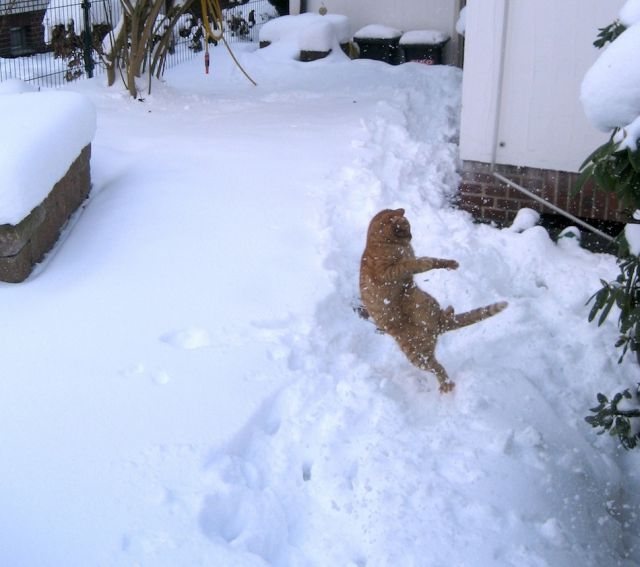 3d Cute Dog Wallpaper Marvelous Cats Having A Blast In The Snow 50 Pics