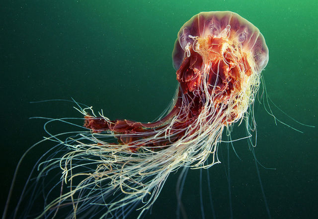 Stunning Photos of the Underwater Life