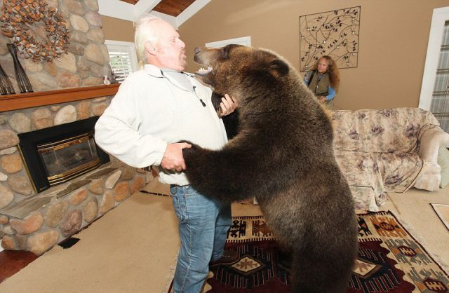 Canadian Couple Has Grizzly Bear Pet 19 pics  Picture
