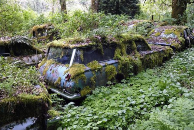 Beauty Quote Wallpaper A Forest Burial Place For Abandoned Cars 30 Pics