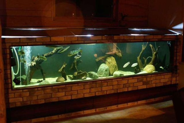 Fish Tank In Living Room