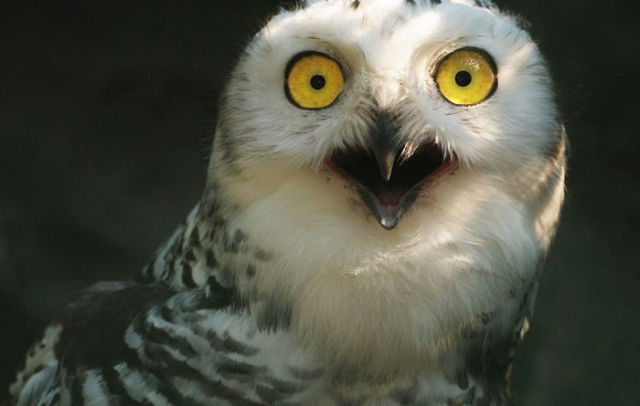 When You Surprise An Animal They Look Like This 45 Pics