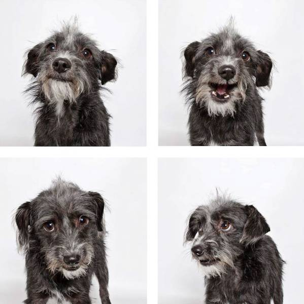 Shelter Dogs Get Photoboothed To Help Them Find A New Loving Home