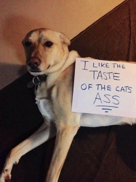 Dog Shaming Always Looks Fun