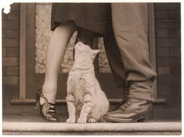 These Kitties Will Cause Cuteness Overload