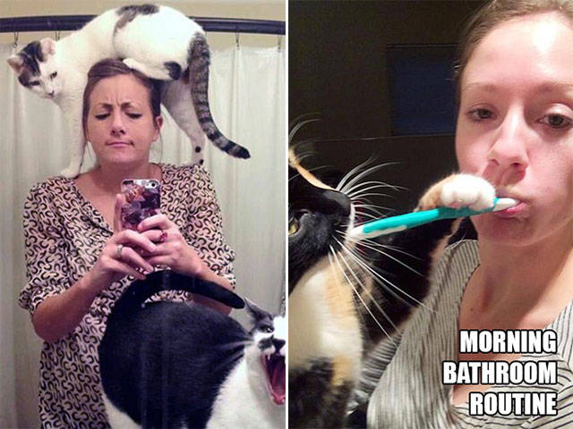 Only Cat Owners Can Relate