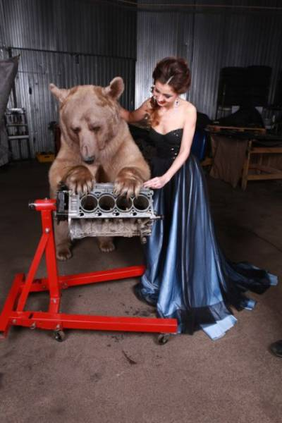 Russian Model Posing With A Huge Brown Bear In A Photo