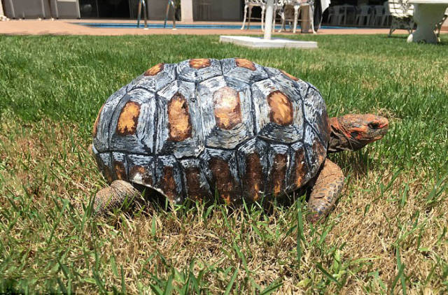 First Ever 3D Printed Shell For A Tortoise