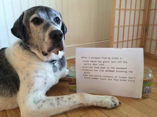 Funny And Clever Dog Pet Shaming 40 pics  Izismilecom