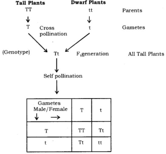 class10 science ch9 image2