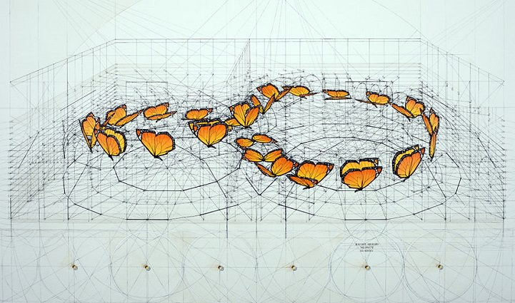 8字形蝴蝶黃金比例軌跡