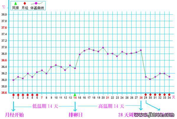 排卵期在經期的后幾天_百度寶寶知道-月經來潮后的第14天前后是排卵期,包不包括經期的那幾天呢?