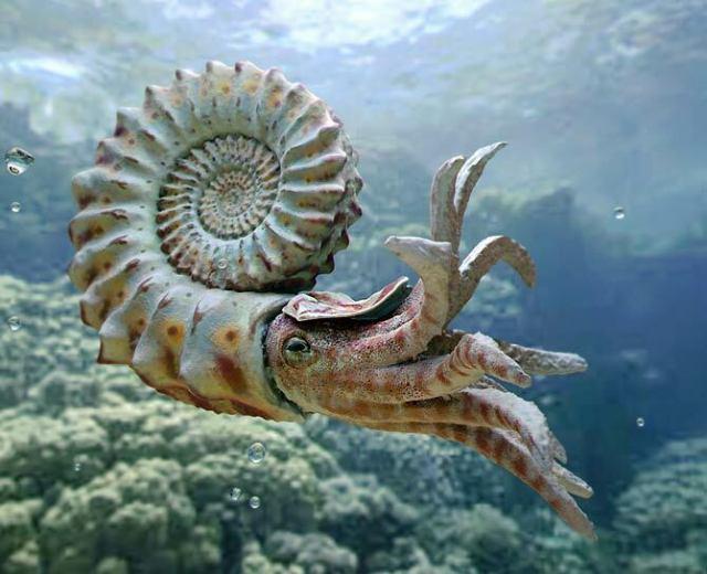 Era paleozoiczna – Ordowik   DinoAnimals.pl