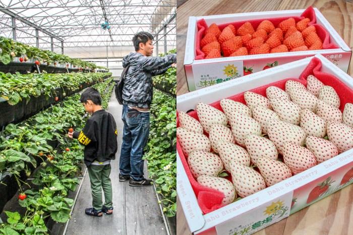 台中清水,沐光農場採草莓之旅~還有正夯的白草莓與多肉植物區...