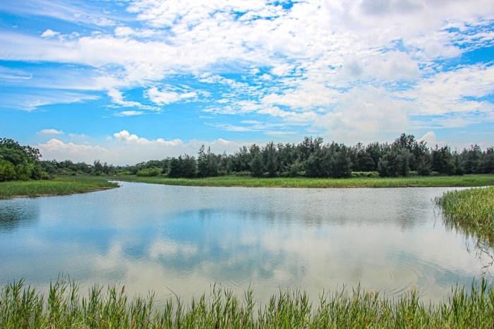 嘉義東石,擁有豐富生態的海埔新生地,鰲鼓濕地!