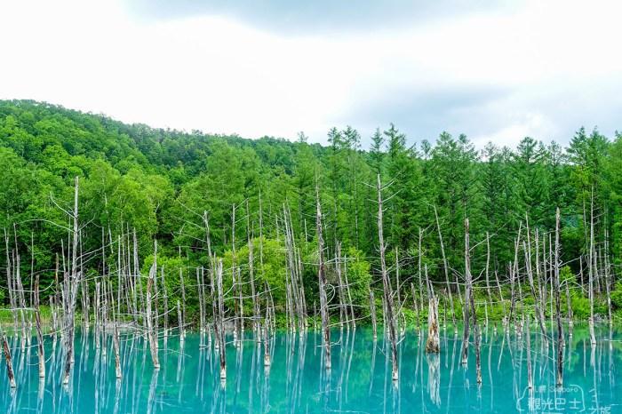 [北海道] 探訪仙境飄渺的白金青池,就踏上歸途吧-北海道巴士旅-6
