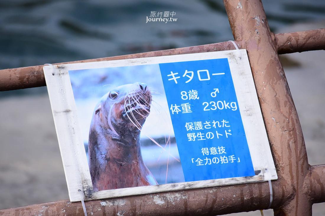 北海道,小樽,小樽景點,札幌景點,小樽水族館