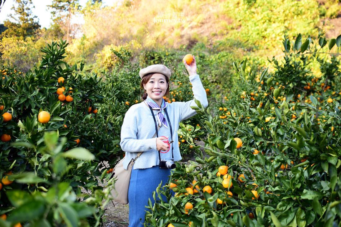 日本,大阪,觀光果園,體驗,和泉,いずみ小川ブルーベリー園