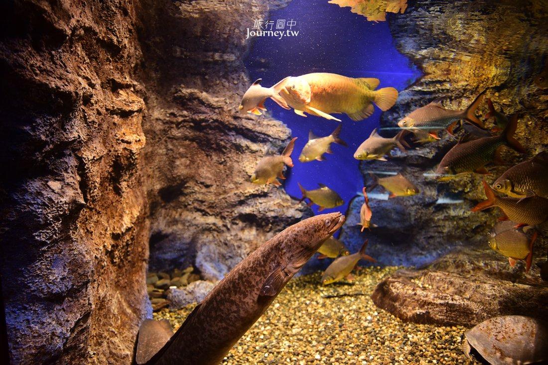 日本,北海道,北見,淡水魚,大地水族館,北の大地の水族館