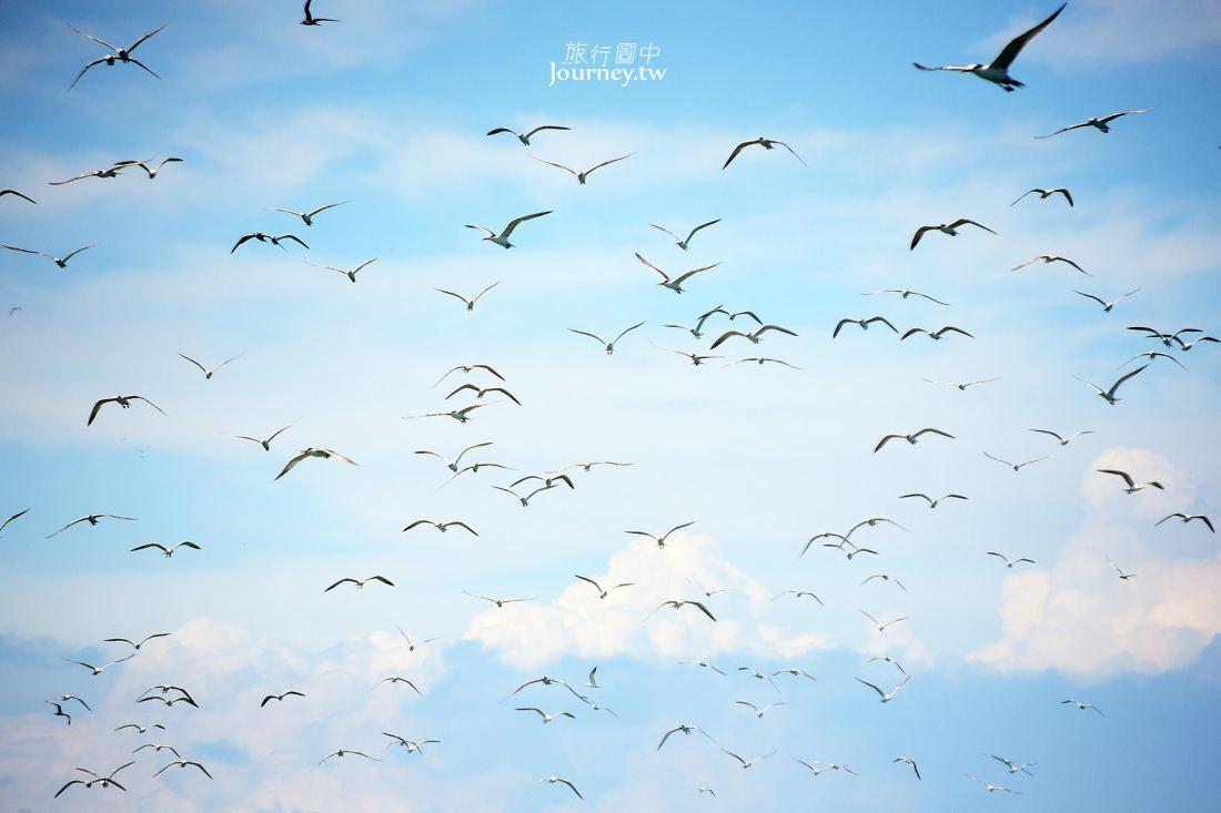 馬祖,北竿,海上看馬祖,燕鷗,神話之鳥